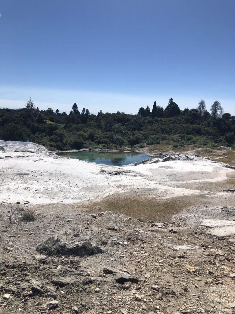 Pōhutu geyser Tepuia
